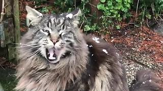 Curious Cat Dazzled With The Mesmerizing Sight Of Snowfall - Video