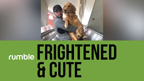 These frightened pets are still adorable in this heartwarming compilation!