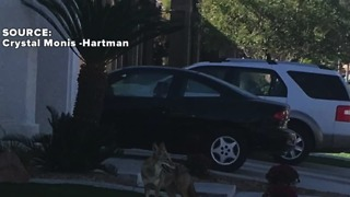 Coyote sightings have neighbors worried - Video
