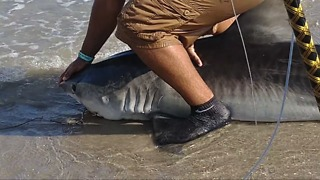 Fisherman Gets up Close and Personal to Free Seven-Foot Shark - Video
