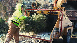 What Happens To Trees After Christmas? - Video