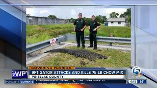9-foot alligator attacks, kills 75-pound dog in Florida - Video