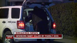 Newborn mauled to death by family dog - Video