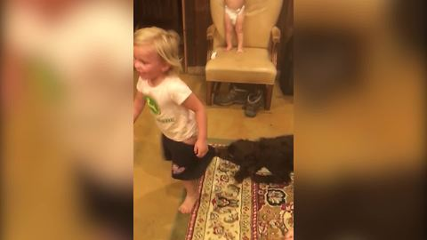 Puppy Dog Pulls Off A Toddler's Pants
