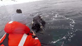 Tourists Have Close Encounter With Friendly Humpback Whales - Video