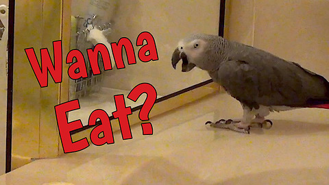 Discriminating parrot has specific dinner request