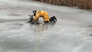 Heroic Firefighters Save Dog After Falling Into Icy River - Video