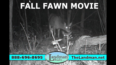Young Fall Fawn Momma Doe Deer Flying Squirrel Rabbits Chase & Buck Video Movie - Landman Realty LLC