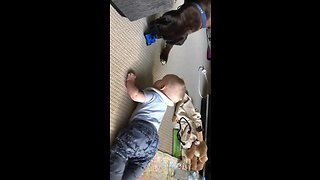 Doggy gives toy to baby to stop crying