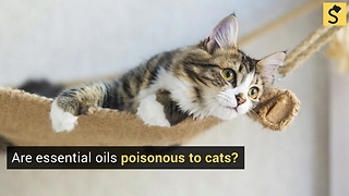 Are Essential Oils Poisonous to Cats?
