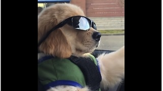Coolest puppy ever hits the open road - Video