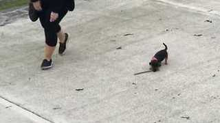 Tiny Dog Learns to Play Fetch - Video
