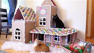 This Gingerbread Cat House Is A Perfect Replacement For A Tree - Video