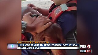 U.S. Coast Guard rescues dog lost at sea
