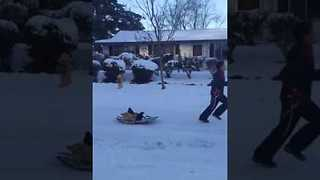Child Pulls Chickens On A Sled In Portland Snow - Video