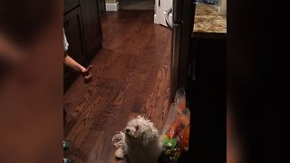 Greedy Pup Won't Share Halloween Candy