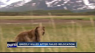 Fish and Game Kills Grizzly Bear - Video