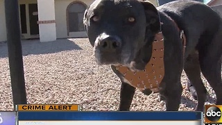 Dogs let out after string of burglaries in Phoenix neighborhood - Video