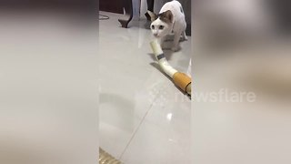 Cat is terrified of vacuum cleaner - Video