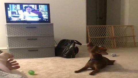 Funny dog 'sings along' the office theme song