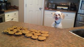 This Pup Really Loves Cookies