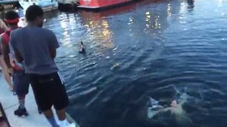 Chicago Teens Jump Into Baltimore Harbor - Video