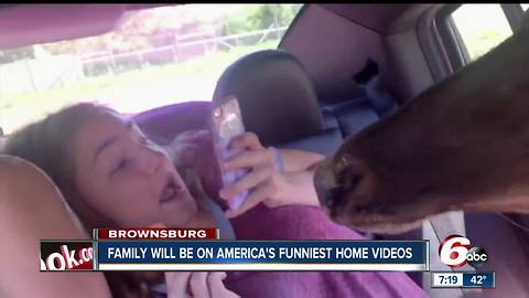 Brownsburg family will be on America's Funniest Home Videos on Sunday