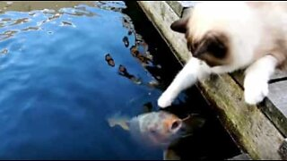 Friendship between cat and fish going strong after five years