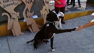 Dogs Protest Tax On Pet Food - Video