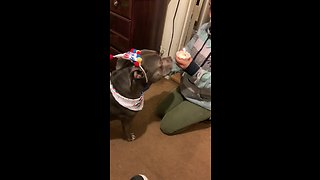 Happy doggy successfully blows out birthday candle