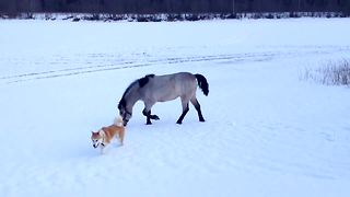 Dog and horse are unlikely best friends