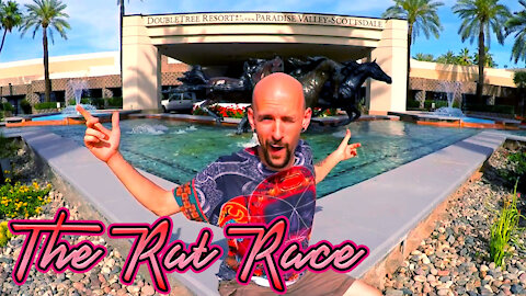 The Rat Race ~ Stop Spinning your Wheels and Begin to Gallop!