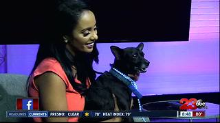 Meet our 23ABC Pet of the Week, Charlie! - Video