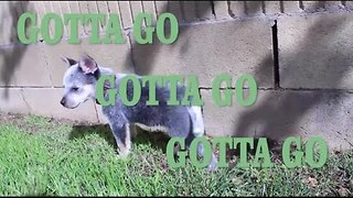 Potty Training From a Pupper's Perspective - Video