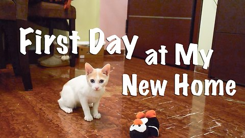 Kitten's First Day at it's New Home - Scared, Cute, Curious