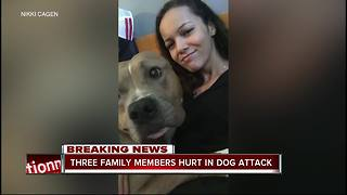 Dog stabbed to death after attacking Safety Harbor family - Video