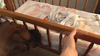 US dog obsessed with newborn baby gently rocks her to sleep