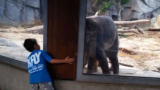 Boy Plays Peek A Boo With Bear At The Zoo - Video
