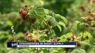 Strawberries are in short supply - Video