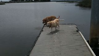 15 Adorable Dock Dogs - Video