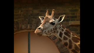 London Zoo Animals Cool Off In Hot Weather - Video