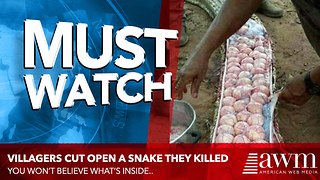 As Soon As Villagers Cut Open Snake They Killed, They Realize Huge Mistake They Made - Video