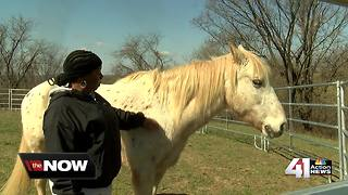 KCRM Women's Center launches equine therapy program - Video