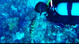 Grouper has touching reaction to seeing his divemaster friend