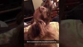 Doggie Diva Hits the High Notes - Video