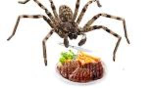 Spider Reclassified as Omnivore - Video
