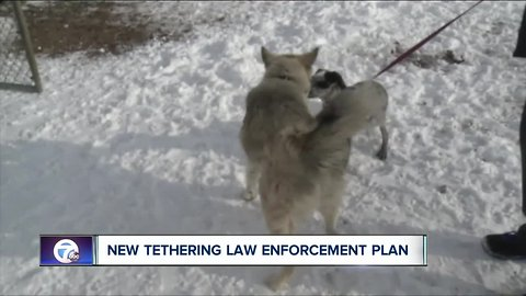 Vets say new dog tethering law needs adjusting