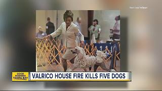 Five dogs die in house fire next to pet resort in Valrico; three were champion show dogs - Video