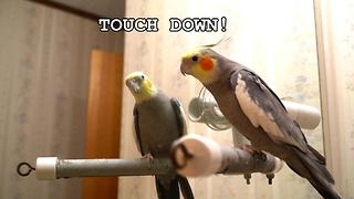 Listen To What This Brilliant Talking Cockatiel Has To Say - Video