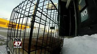 Dog left out in cold on Michigan shelter steps - Video